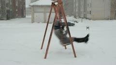 Woman coat sit old retro metal swing winterstorm snow fall Stock Footage