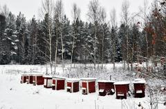 Red hives in winter Stock Photos
