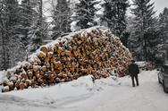 Big timber stack Stock Photos