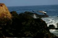 Seagulls Slow Motion 38 Malibu High Speed 240fps Stock Footage