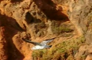 Seagulls Slow Motion 45 Malibu High Speed 240fps Stock Footage
