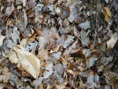 Leaf Pile pan - stock footage