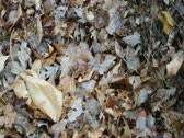 Stock Video Footage of Leaf Pile pan