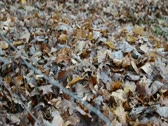 Stock Video Footage of Pan of Leaves on ground