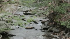 Babbling Brook in evergreen forest Stock Footage