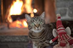 Cat near a fireplace with puppet Stock Photos