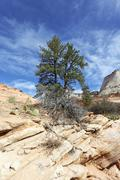 Stock Photo of zion park