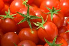 Freshly picked cherry tomatoes Stock Photos