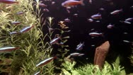 Sea life in aquarium 2 Stock Footage