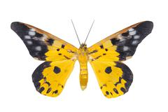day moth butterfly - stock photo