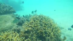 Coral and fish Stock Footage