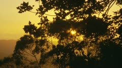Sunset through Australian forest Stock Footage