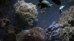 Tropical aquarium fishes - stock footage