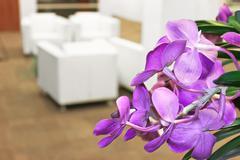 Kukkia toimiston sisustus Kuvituskuvat
