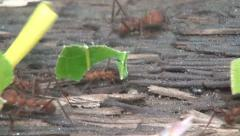 Ants, Strength, Carrying, Insects, Animals Stock Footage