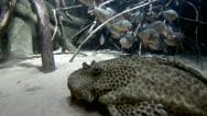 Stock Video Footage of Sea life in aquarium 6