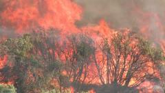 Wildfire Flames, Forest Fully Engulfed by Fire 2 - stock footage