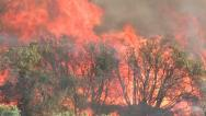 Stock Video Footage of Wildfire Flames, Forest Fully Engulfed by Fire 2