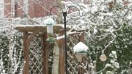 Garden birds at feeders in winter in England Stock Footage