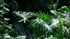 Small tropical waterfall (4 of 4) - stock footage