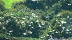 Birds colony Stock Footage