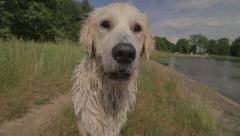 Happy wet dog Stock Footage