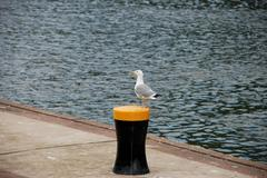 Gull standing on a bollard by the river Stock Photos