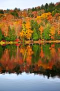 fall forest reflections - stock photo
