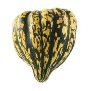 winter squash isolated - stock photo