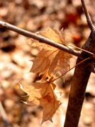 brown winter - stock photo