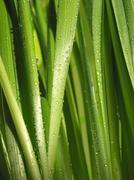 Stock Photo of green grass macro