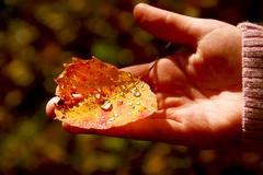 Hand fall leaf Stock Photos