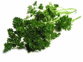 Stock Photo of fresh parsley on white background