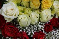 Yellow, white and red roses Stock Photos