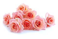 Stock Photo of pink roses on white