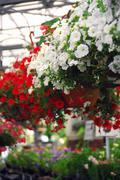 Stock Photo of greenhouse