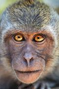 Portrait of curious monkey Stock Photos