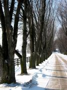 Stock Photo of winter tree lined lane 3