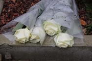 Mourning roses Stock Photos