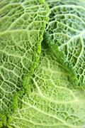 Stock Photo of closeup of green cabbage leaves