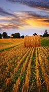 Stock Photo of golden sunset over farm field