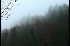 Trees covered by fog and are hardly seen Stock Footage