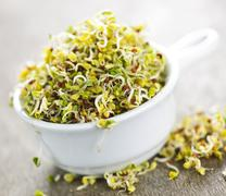 alfalfa sprouts in a cup - stock photo