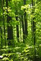 Stock Photo of green spring forest