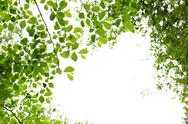 Stock Photo of green spring leaves on white background