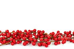 Red christmas berries border Stock Photos