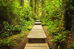 path in temperate rainforest - stock photo
