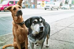 Two dogs on sidewalk Stock Photos