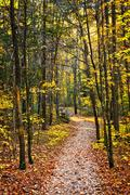 Path in fall forest Stock Photos