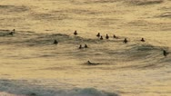 Stock Video Footage of Surfers waiting for waves at sunset.